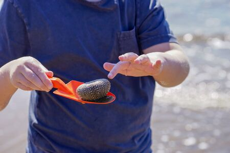 The skeleton of a sea urchin in a red scoop in the hands of a boy. Vladivostok, Russia