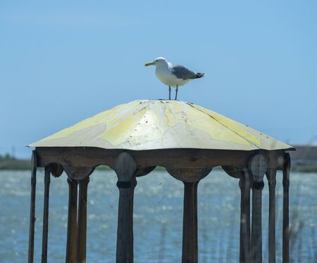 Natural landscape with a view of a Seagull sitting on a gazebo.