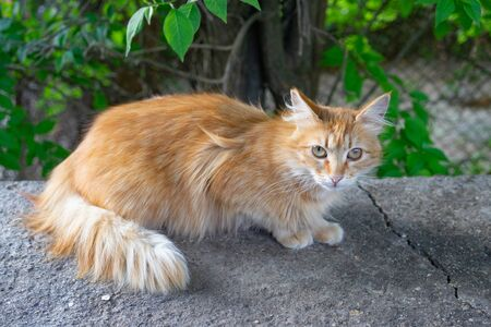 Red cat on the background of a natural Park.
