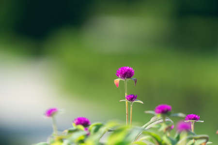 Natural background with pink flowers on a blurry green background