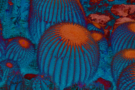 Abstract cactus texture background in blue and red