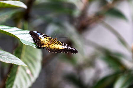 Orange butterfly with open wings sitting on a sheet mushmuly