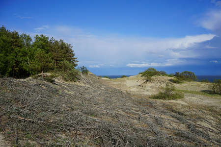 natural landscape with views of the sand dunes, reinforced with tree branches on the background of the Baltic sea on the Curonian spit in Russia