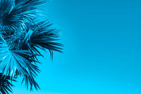 Blue natural background with palm leaves.