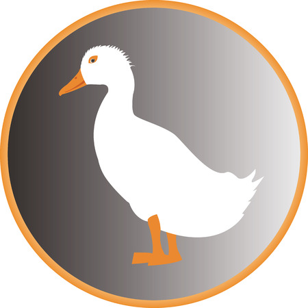 waterfowl: duck in orange circle