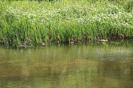 canne: canne di fiume