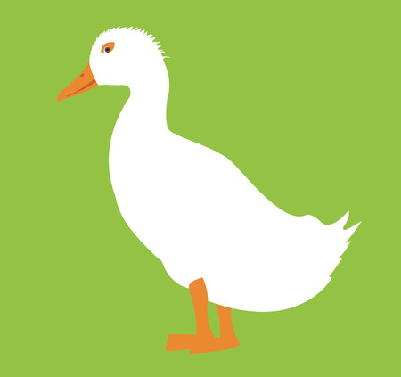 waterfowl: duck Illustration