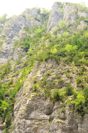 vegetation: mountains and rocks, overgrown with vegetation