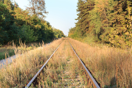 forest railroad: railroad tracks run next to the forest