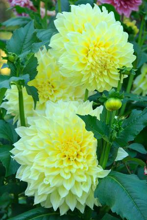 lobe: beautiful flower with many petals