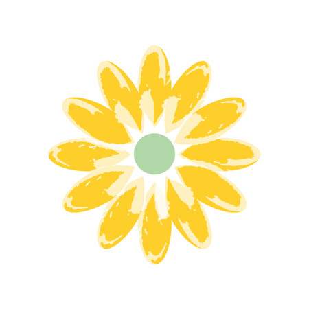 chamomile flower: color Daisy flower, beautiful chamomile