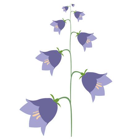 flowering plants: summer flowering plants flower bell Illustration