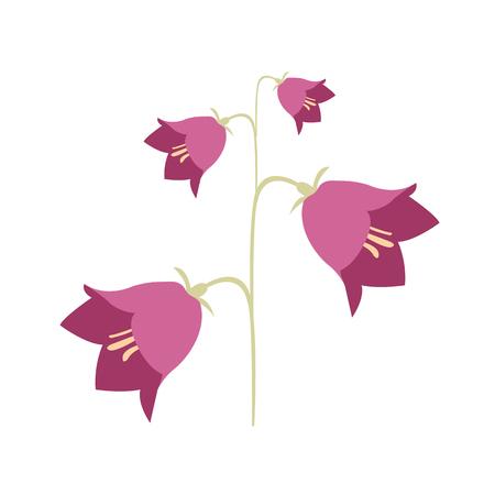 bluebell: summer flowering plants flower bell Illustration