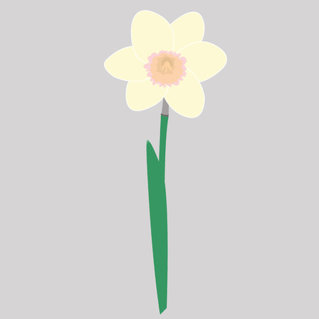 jonquil: flower of daffodil, nature picture