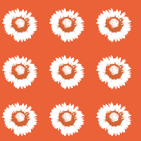 flora flower: color flower daisy on color background