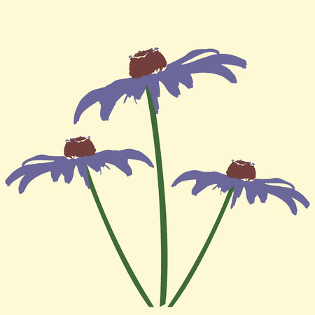 jerusalem artichoke: three beautiful Daisy flower Jerusalem artichoke Illustration