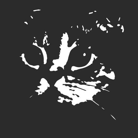 muzzle: sketch of the muzzle of Scottish fold cat