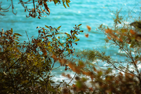 reassure: green leaves on a background of sea