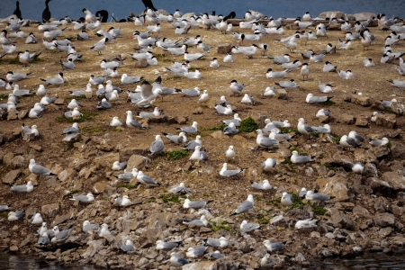 seagulls gathering on island photo