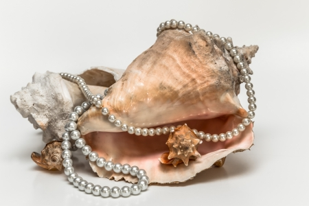 seashell wrapped with pearl necklace photo