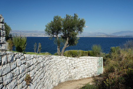 Landscape with a lonely olive tree in Greece. Stock Photo