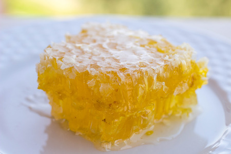 honey comb: Honey comb in a white plate. Shallow depth of field