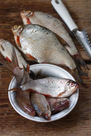 river fish: Freshly caught river fish. Selective focus