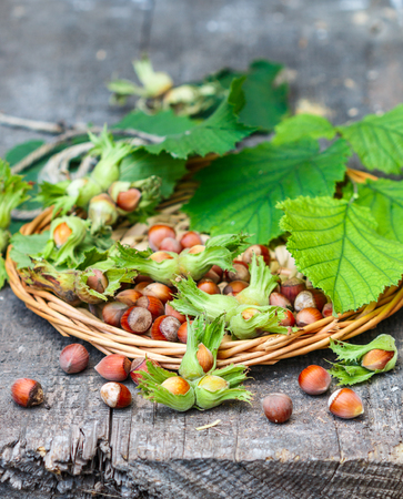 albero nocciolo: Nocciola nelle coperture con foglie su un tavolo di legno. stile rustico. messa a fuoco selettiva