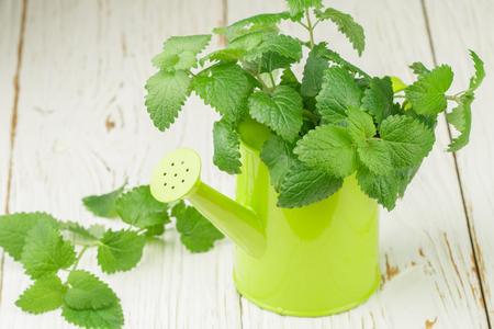 Organic Melissa. Sprigs of fresh lemon balm in a decorative vase. Spicy greens. Selective focus Stock Photo