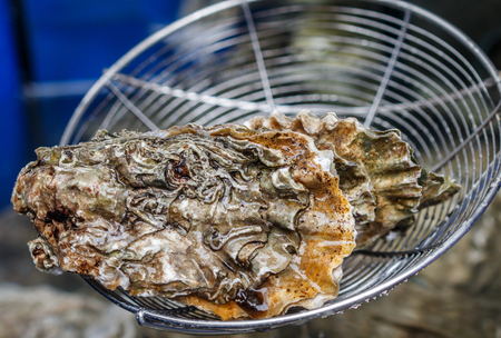 Fresh raw oysters. Seafood. Gourmet appetizer. Selective focus