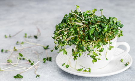 Raw Green Organic radish or daikon Microgreens for making fresh salads. detox, diet. seedlings. Concept and healthy eating. Selective focus, copy space Foto de archivo