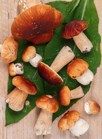Forest edible mushrooms. Freshly picked boletus on a light wooden background. Selective focus, top view