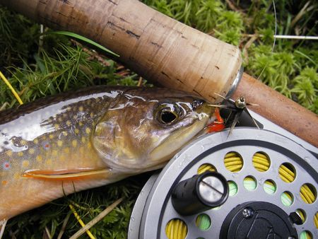 Small brookie catched on red tag, fly fishing