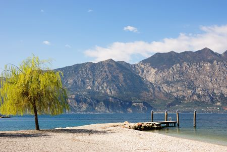 Weeping willow and ol wood moorage for boats. Garda Lakes Coast. Italy, Europe. Stock Photo