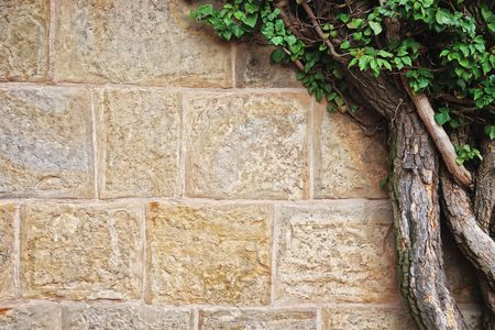 Ivy and Old Stone Wall Texture Background with space for text.