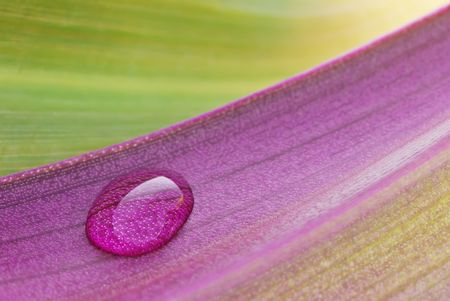 Extreme macro shot of waterdrop on purple leaf with green one on background. Shallow DOF.
