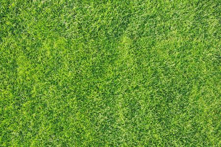 recently: Top view of a healthy and and recently cut green grass.