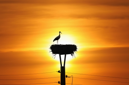 Silhouette of stork in the nest in sunset