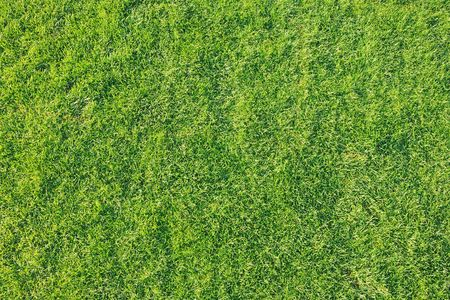 Top view of a freshy and recently cut green grass.