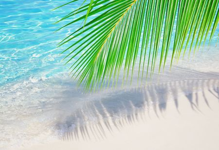 corall: Theme for summer vacations - palm leaf over corall sand near the ocean