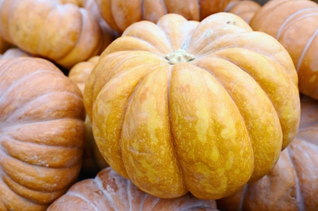 Pile of pumpkins  Can be used as background  Stock Photo