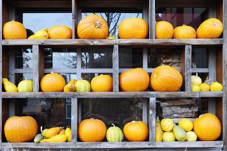 Agriculture set - fresh pumpkins on a wooden rack