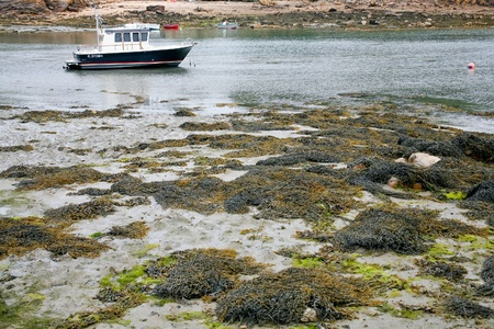 boat mooring during egg in Ile de Brehat, Brittany, France photo