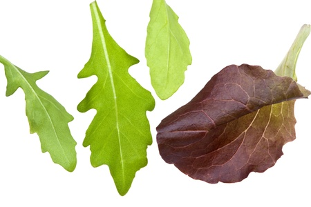 leafs of rocketsalad isolated on white Stock Photo - 9557193