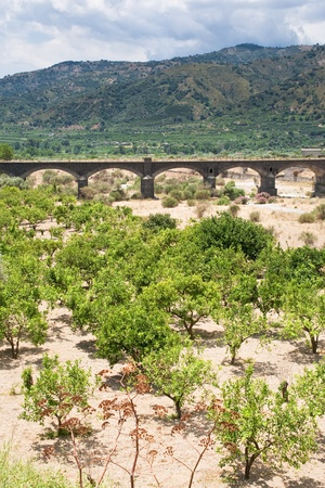 agrarian: citrous garden and bridge in dry riverbed, Sicily Stock Photo
