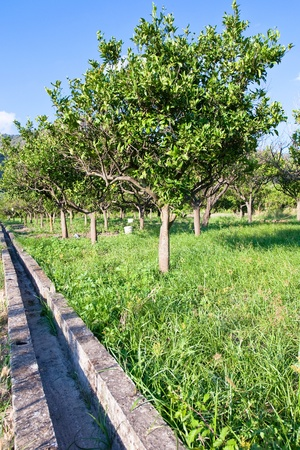 region sicilian: tangerine garden and empty irrigation canal in Sicily Stock Photo