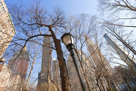 buildings and naked trees in New York Stock Photo - 12415298