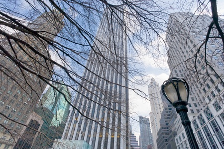 buildings and naked trees in New York photo