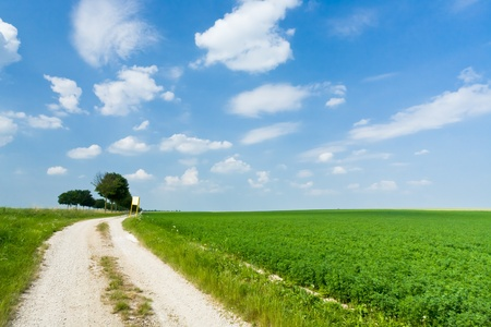dirt road along lucerne field Stock Photo - 12415105