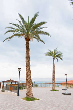 palm trees in resort on Dead Sea, Jordan photo
